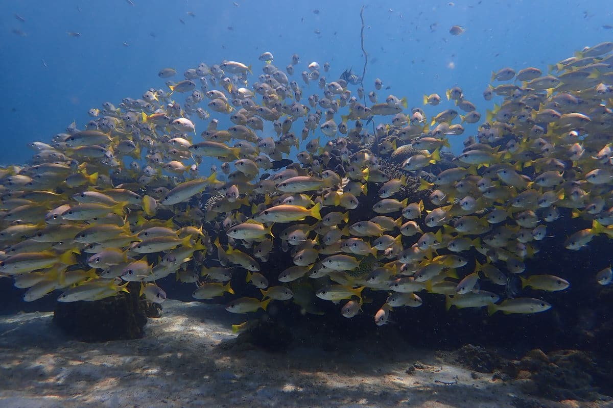 school of fish at nosy tanikely