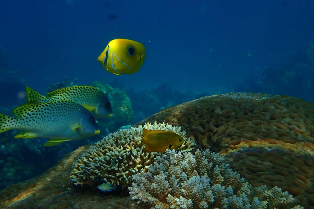 faune marine Rand'eau Palmée Tanikely / Sakatia
